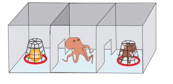 Der Versuchsaufbau des Oktopus-Experiments: Ein Aquarium mit drei Kammern.