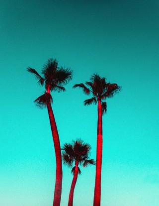 1538987577579-Kate-Bellm-Palms