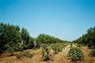 1539002719961-Travel-Guide-Essaouria-Morocco-Val-DArgan-1