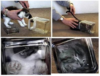 Bonsai Kitten auf rotten.com