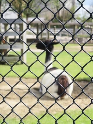 1539047144261-Ark-Encounter-zoo-llama