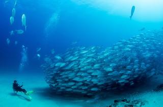 1539079285588-Diving-min