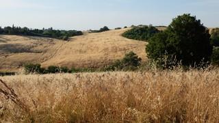 Campo-di-grano-Italia
