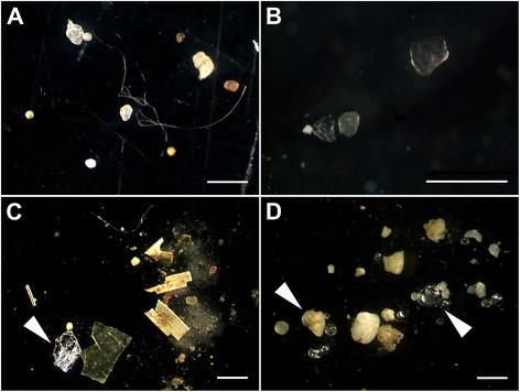 Microplastics from river sediment