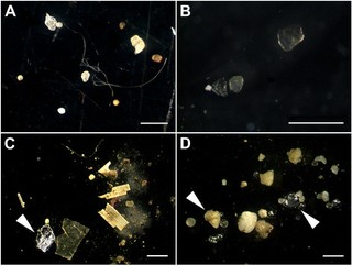 Microplastics from river sediment