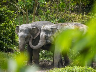 Ethical-Elephant-Sanctuaries