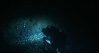 Octopus nursery captured on film by the Nautilus exploration vessel near Davidson Seamount.