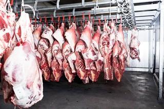 kvæg hænger i slagterhal