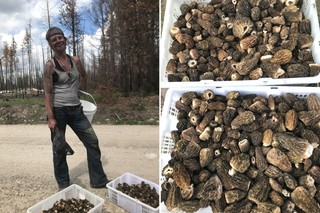 Morel picker Lori Fox