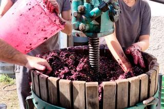 Lavoro al torchio vini naturali abruzzo