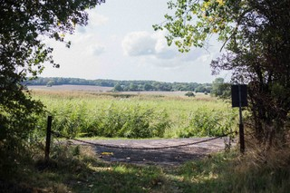 Grønt landskab på Falster ved Knud Romers sommerhus