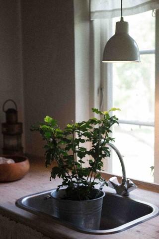 Der står i potteplante i køkkenvasken