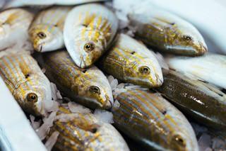 Asta-pesce-fiumicino-salpe