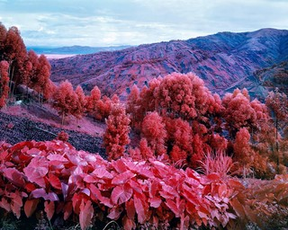 Richard-Mosse-Travel-Photography-Paris-Photo
