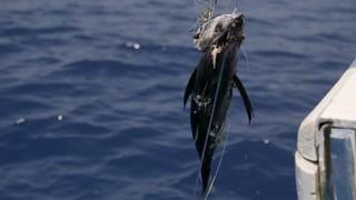 1543220555813-pest_kingdom_shark_hunters_1_scene1