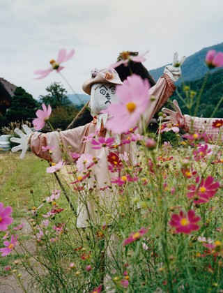 maxwell tomlinson photographs a scarecrow in a field of flowers