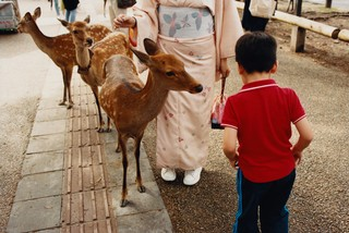 maxwell tomlinson photographs deer and a child