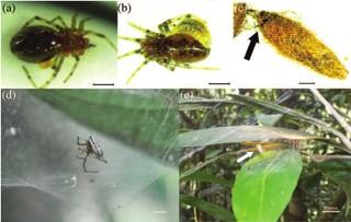 Nahaufnahmen der Wespen und Spinnen
