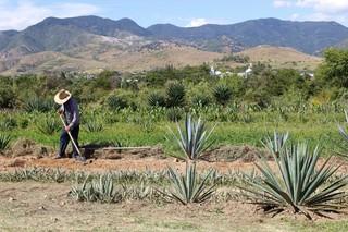 The hills surrounding the Lalocura palenque in Santa Catarina Minas, Oaxaca.