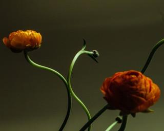 yumna al-arashi photographs flowers