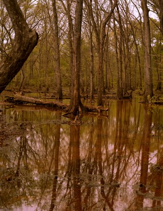 zachary chick photographs a lake in the woods