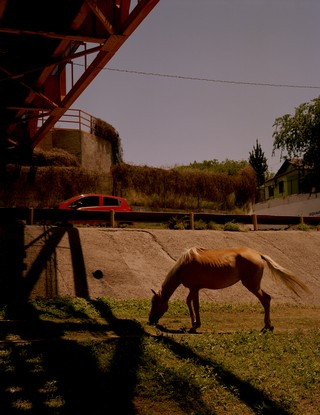 zachary chick photographs a horse