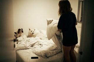 Birgitte og hundene
