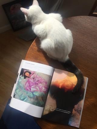 vicki king photographs a cat next to a magazine