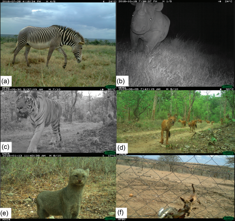 Wildlife caught on camera traps set up by children at schools around the world.