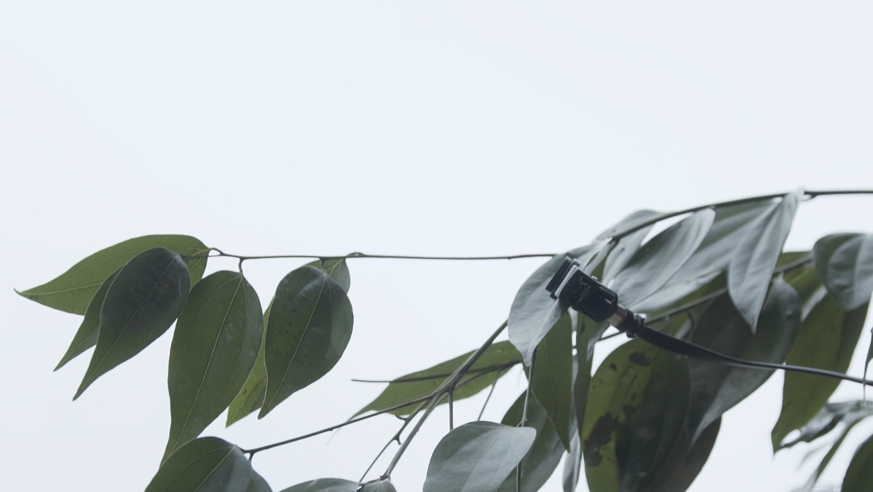 Sensor attached to the tree