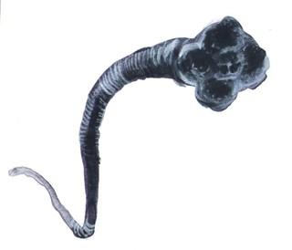 1545073729939-parasito1