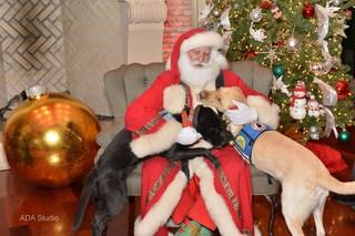 santa claus father christmas dogs hug
