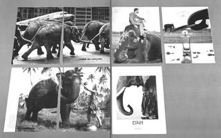Archive Species detail