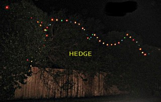 A string of Christmas lights in a hedge