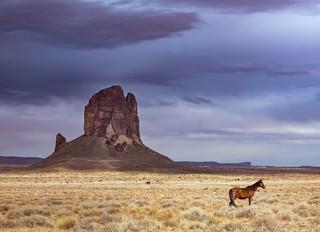 1545562837020-Wild-Horse-Monument-Valley-Arizona