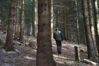 Ein Jäger im Wald