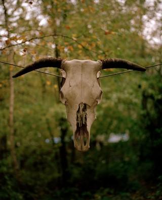 schedel op het ADM-terrein