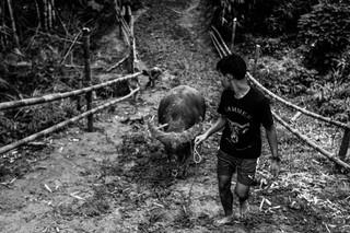 1547203218033-Tedong-Silaga-9