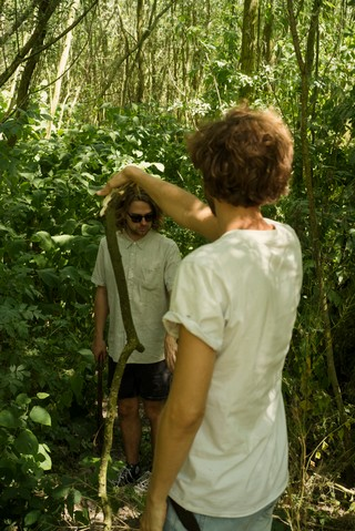 Jagd in het bos.