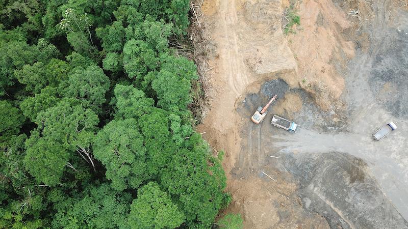 Palm oil deforestation in Borneo.