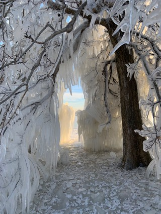 Ice covers a tree in Chicago.