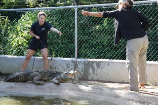 Dr Marisa Tellez and Miriam Boucher wrangling a croc