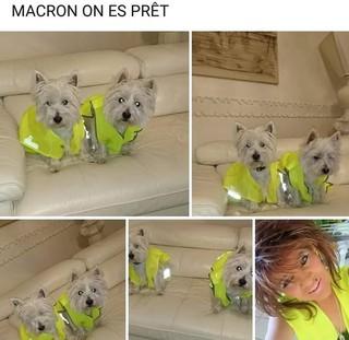 1549366465596-GJ-chiens