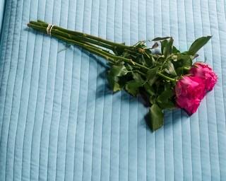 rozen-op-bed-Jonas-Van-der-Haegen-where-did-we-meet-last-time