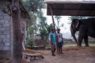 1549892368148-Elephant-Tourism-Nepal-9-of-13