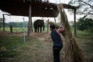 1549892406772-Elephant-Tourism-Nepal-8-of-13