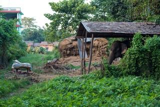 1549892503529-Elephant-Tourism-Nepal-4-of-13