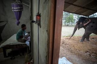 1549892800367-Elephant-Tourism-Nepal-13-of-13