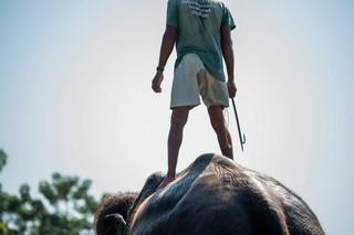 1549894835190-Elephant-Tourism-Cruelty