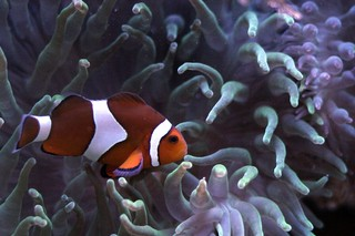 1550103201502-Palma_Aquarium-Pez_payaso